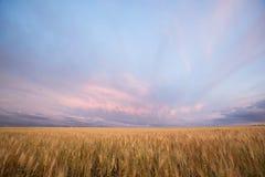 ландшафт хлебоуборки Стоковое Изображение RF