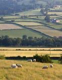 ландшафт холмов сельской местности Стоковые Изображения