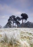 ландшафт холодного дня морозный Стоковое Изображение RF