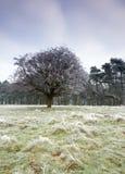 ландшафт холодного дня морозный Стоковая Фотография RF