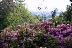 Ландшафт цветка стоковые изображения rf