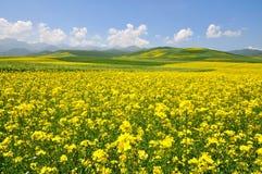 Ландшафт цветка Cole Стоковая Фотография