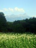 ландшафт Швейцария Стоковые Изображения