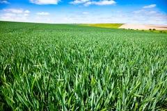 Ландшафт южная Англия Великобритания лета сельский Стоковое Изображение RF