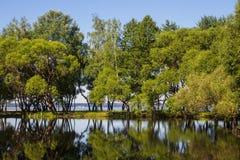 Ландшафт, яркий день Деревья, вода, яркое небо стоковые изображения