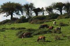 ландшафт 2 Ирландия Стоковые Изображения