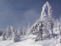 ландшафт altai красивейший Стоковые Фотографии RF