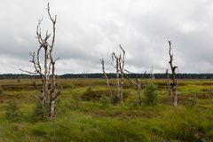 Ландшафт Botrange Бельгия фенов деревьев смерти высокий Стоковые Фотографии RF