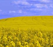 ландшафт canola 2 Стоковое Изображение RF