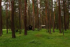 Ландшафт coniferous леса Стоковое Изображение