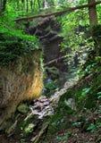 Ландшафт Fairy леса Стоковая Фотография RF