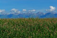 ландшафт kyrgyzstan сценарный стоковое изображение