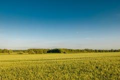 Ландшафт Minimalistic, урожаи и простое небо Стоковые Фотографии RF