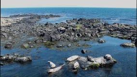 Ландшафт Portrush Атлантического океана антрима Северной Ирландии видеоматериал