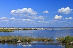 Ландшафт seashore Балтийского моря за Pärnu стоковая фотография rf