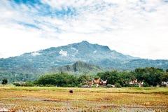 Ландшафт Tana Toraja Поле риса с буйволом, традиционными torajan зданиями, tongkonans и горами на предпосылке Rantep Стоковые Фото