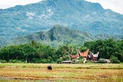 Ландшафт Tana Toraja Поле риса с буйволом, традиционными torajan зданиями, tongkonans Rantepao, Сулавеси, Индонезия Стоковые Фотографии RF