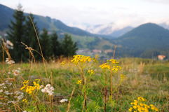 Ландшафт Tatra гор с зеленым лесом, голубыми облаками и лугом Стоковые Изображения RF
