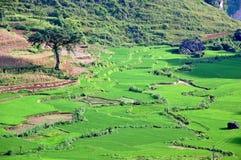 ландшафт terraced Вьетнам поля Стоковое Фото