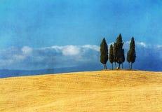 Ландшафт tuscan год сбора винограда стоковое изображение