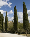 ландшафт tuscan фермы кипариса стоковые изображения rf
