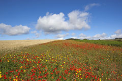 Ландшафт Wildflower Стоковое Фото