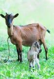 Лань и ребенк Стоковая Фотография RF