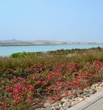 Ландшафтный сад, канал моря, холмы, курорт гостиницы Anantara, господин Baniyas Остров Стоковая Фотография