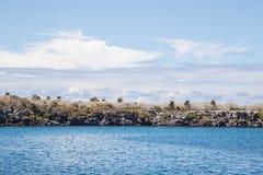 Ландшафты Галапагос: Остров Санта-Фе Стоковое Фото