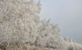 Ландшафты зимы стоковые фотографии rf