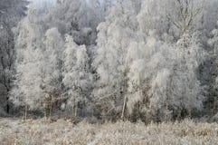 Ландшафты зимы Стоковая Фотография RF