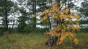 Ландшафты осени Стоковые Фотографии RF