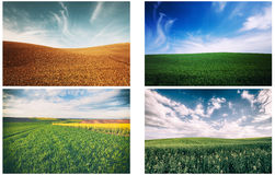 Ландшафты поля природы Стоковое Изображение RF