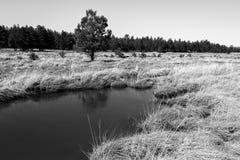 Ландшафты Mary озера Стоковые Фото