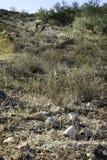 Ландшафт Аризоны Стоковое фото RF