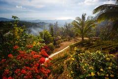 Ландшафт ладони, цветки, горы к Таиланду Samui Стоковая Фотография RF