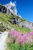 Ландшафт Альпов: горы, цветки, водопад и ясное голубое небо Стоковая Фотография RF