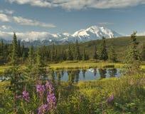 Ландшафт Аляски с ясным Denaili Стоковое Изображение RF