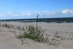 Ландшафт Балтийского моря, Hel дюны, Польша стоковое изображение rf