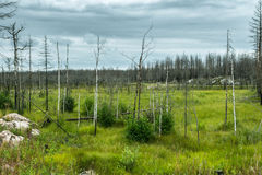 Ландшафт беря от лесного пожара Стоковая Фотография