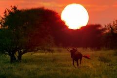 Ландшафт Ботсвана Стоковое Изображение