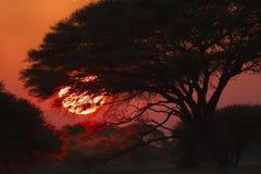 Ландшафт Ботсвана Стоковое Изображение RF