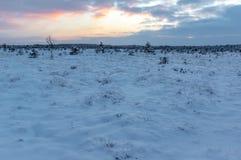 Ландшафт болота зимы на заходе солнца Стоковая Фотография