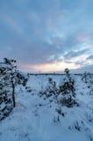 Ландшафт болота зимы на заходе солнца Стоковые Изображения