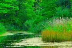 Ландшафт болота Стоковое Изображение