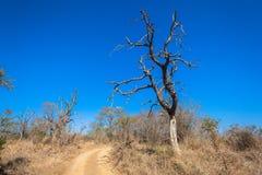 Ландшафт Буша деревьев грязной улицы сухой Стоковые Фото