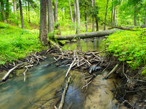 Ландшафт валы зеленого цвета травы стоковое изображение rf