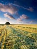 Ландшафт валы зеленого цвета травы стоковое фото rf