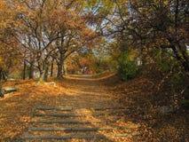Ландшафт Венгрии красоты, фото парка Осень Стоковое Изображение RF