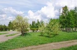 Ландшафт весны в автостоянке города, Омске, России Стоковое Изображение